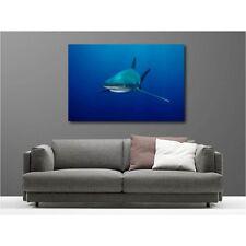 Tableau toile déco requin 2721708.