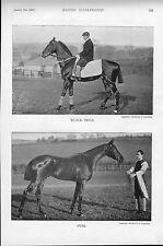 1896 ILLUSTRAZIONE dal RACING illustrato. CAVALLI: nero Duck & iping