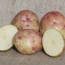 Cara Seed Potatoes - Certified Irish Seed (Class S) Maincrop