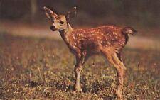 Vintage POSTCARD c1960-70s Baby Deer Dorval's Camp Kipawa Lake LANIEL, QUEBEC