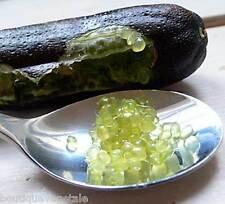 Graines de Citron Caviar - Microcitrus australasica - Finger lime seeds