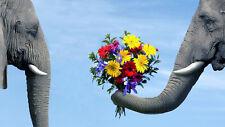 Elephant Flowers Home Decor Canvas Print, choose your size.