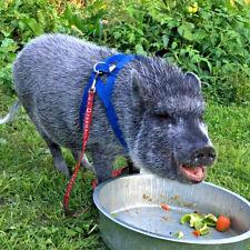 baSIX© Mini Pig Harnesses & Leashes - by piGGlz.com