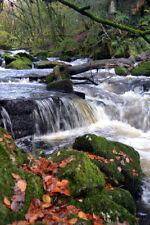 Golitha Falls Bodmin Moor Cornwall Art Photo Canvas (UK)