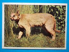 Figurina Panini-ANIMALI DI TUTTO IL MONDO 1965-n.82-LINCE O CARACAS-rec