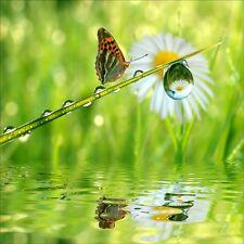 Stickers muraux déco : papillon lac 1279
