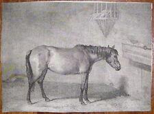 1805-CAVALLO IN STALLA-INCISIONE ORIGINALE-ENGLISCH HORSE.