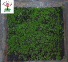 Fairy Garden Faux Fake Artificial Moss Mat Grass Fairies Gnomes Terrariums