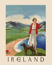485064 Irish Terrier A4 Photo Print Art Posters