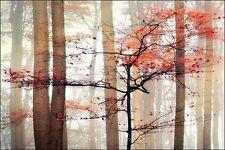 IRENE WEISZ : Naranja Awakening camilla-imagen de Pantalla Árboles niebla