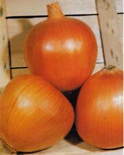 Dorata di Parma Onions - 'golden' onion of Parma, Italy - So Good! Free Ship!