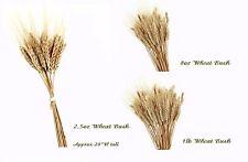 Dried Wheat Triticum Gold Natural 2.5oz/8oz/16oz