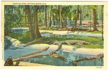 Krokodile, Tropical Park, Daytona Beach, 1943