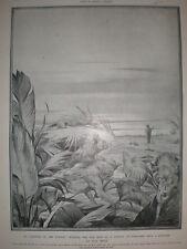 Rudyard Kipling secondo libro della giungla lasciando che nella giungla Edward J Detmold 1910
