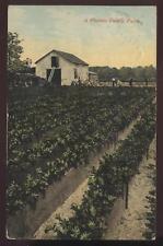Postcard Florida Celery Farm View 1907?
