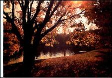 Motiv-AK BAUM BÄUME Tree mit Herbstlaub & Sonne PK