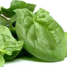 Viroflay Spinach Seeds - Microgreens or Garden      bin322C