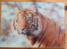BIG CAT, Tigre, JAGUAR, Cucciolo di Leone, Panda rosso, pecore in vetro a Tagliare Assi