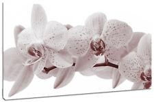 Quadro Moderno Fiori Orchidea Natura Arredo Casa Arte Stampa su Tela Intelaiato