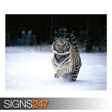 White Tiger (3784) Animal Poster-Photo Poster print ART A0 A1 A2 A3 A4