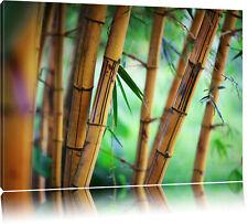 Alter Bambus Wald  Leinwandbild Wanddeko Kunstdruck