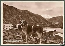 VALLE D'AOSTA GRAN SAN BERNARDO 17 ALBERGO ― CANE CANI - DOG