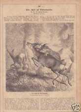 Luchs schlägt Rehbock schöner HOLZSTICH von 1872