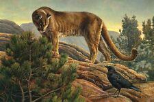 LION ART PRINT - Curiosity by Kalon Baughan 11x14 Wildlife Mountain Cat Poster