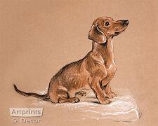 Schnoodle Dachshund by Lucy Dawson (Art Print of Vintage Art)
