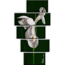 Blume Weiß Grün Leinwand Druck Bild Natur Groß Orchidee