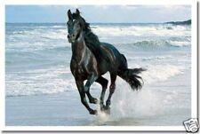 Stallion Running Along Beach  Horse Animal Print POSTER