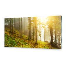 Glasbilder Wandbild Druck auf Glas Wald