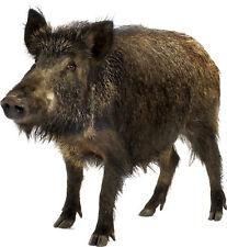 Aufkleber animal Wildschwein 70x75cm