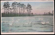 PINEHURST NC Swans in McKenzie's Pond Vtg Handcolored Postcard Old Albertype PC
