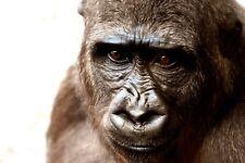 50+ impresionantes ojos digital de la Foto Wallpaper-Gorila-Take a Look!
