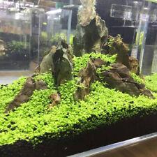 Plant Seeds Aquarium Fish Tank Aquatic Water Grass Foreground Easy Plants 5g New