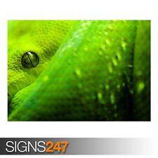 "16 x Gb Eye /""metal Gear Solid V Multi-colour Snake/"" Framed Photograph"