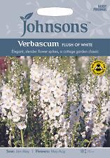 Johnsons Seeds Verbascum Flush of White Seed