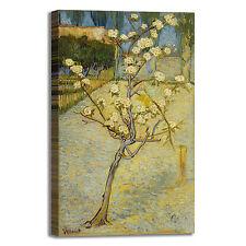 Van Gogh piccolo pero design quadro stampa tela dipinto telaio arredo casa