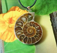 Ammonit Fossil Anhänger  Halskette Kettenanhänger Fossilien Kette Lederband