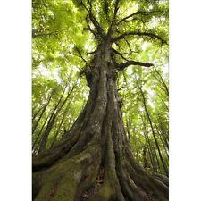 Stickers muraux déco : arbre 1313