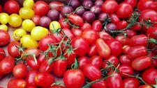 Tomaten fürs Freiland robuste und regentolerante Sorten Samen zum Aussuchen