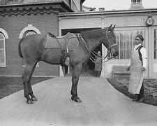 President William Howard Taft's horse Surette at White House stable Photo Print