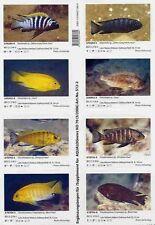 Supplements AQUALOG African Cichlids I Malawi I, Mbuna (Stickers)