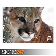 Il Cougar (3405) Animale POSTER-Foto foto poster Arte Stampa A0 A1 A2 A3 A4