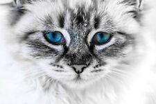 ADORABLE WHITE CAT CANVAS PET PICTURE #37 PRETTY CANVAS WALL ART HOME DECOR