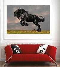 Affiche poster décoration murale Cheval réf 52661530 (6 dimensions)