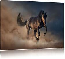 galoppierendes Pferd Leinwandbild Wanddeko Kunstdruck