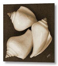 Seashells No 4 Large Black and White Sepia Fine Art Print on Metal or Acrylic
