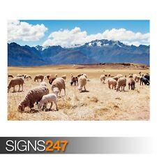 Perú ovejas Campos (3343) Cartel De Animales-Foto Poster Print Art A0 A1 A2 A3 A4
